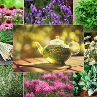 5 dintre cele mai vindecatoare plante medicinale